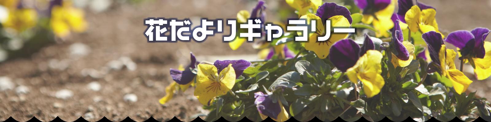 梅の花 開花情報2018